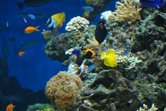 Korallrevet - foto Lasse Lindgren