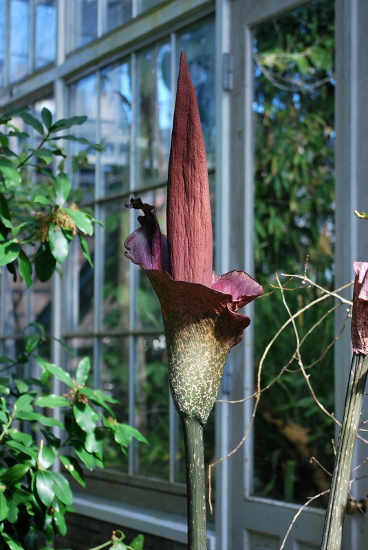 Exotisk blomma i palmhuset
