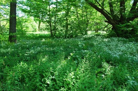 Vilda danska växter